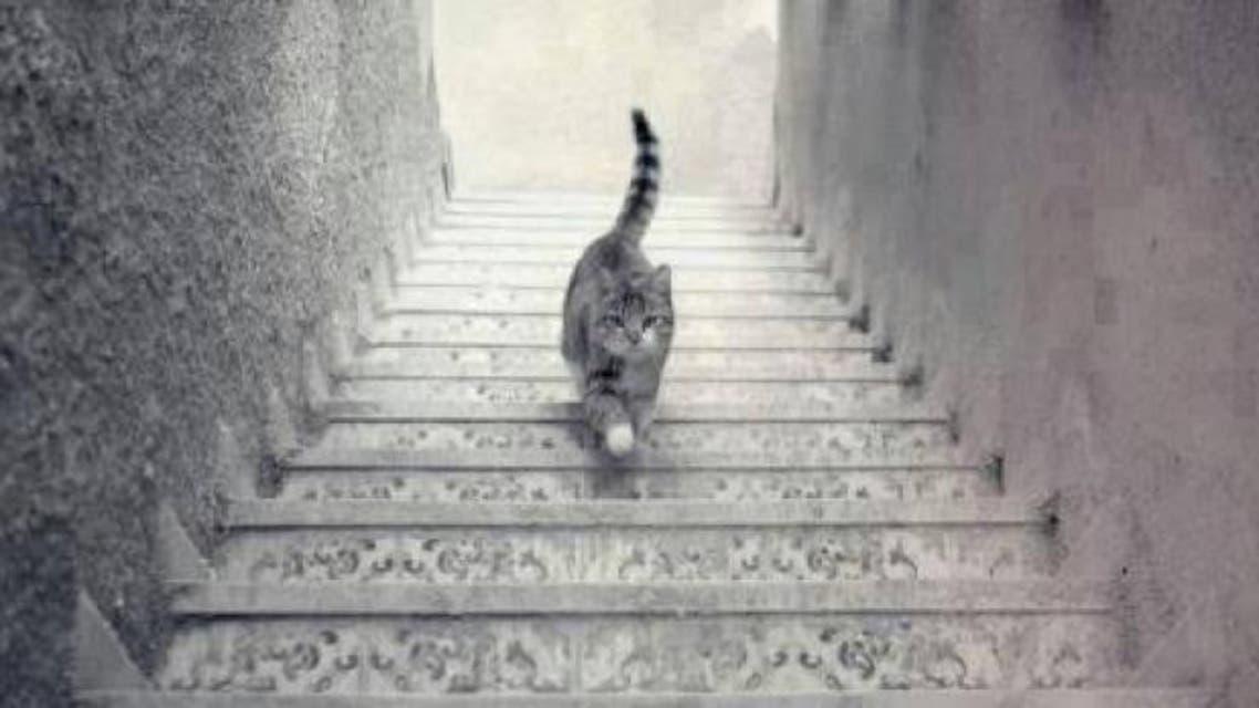 cat twitter stairs