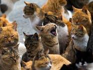 110 قطط طُرِدت من شقة.. ومسعى عاجل لإيوائها