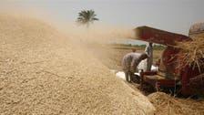 Egypt's GASC buys 300,000 tonnes of wheat