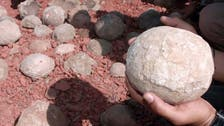 Dozens of dinosaur eggs found at construction site in China