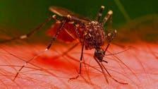 كشف جديد عن حشرة لها 3 قلوب وتقتل 600 ألف كل عام