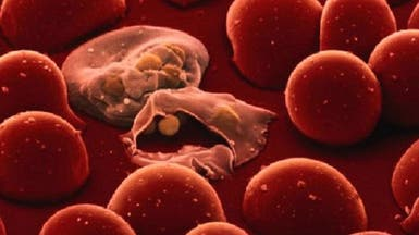منظمة الصحة تتراجع عن القضاء على الملاريا