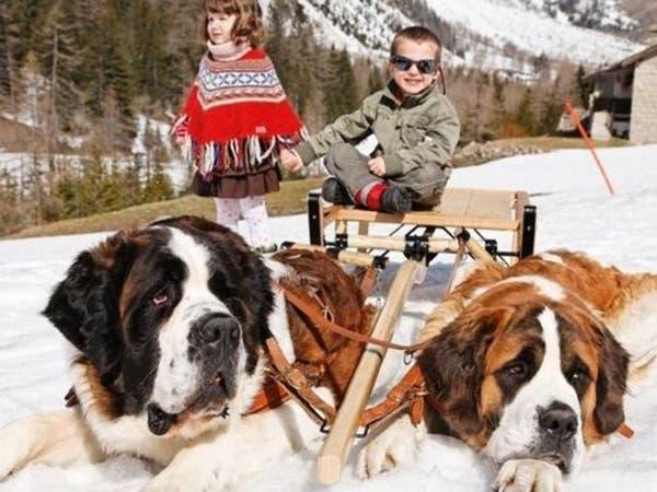 بلدة سويسرية تمنع جلسات تصوير السياح مع كلابها