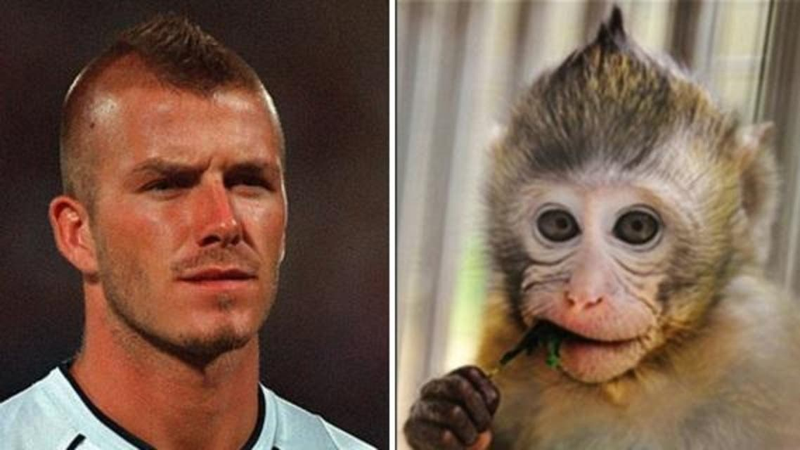A six-month-old monkey who has David Beckham's famous Mohican-like hairstyle is becoming the new sensation in China. (AFP/Europics)