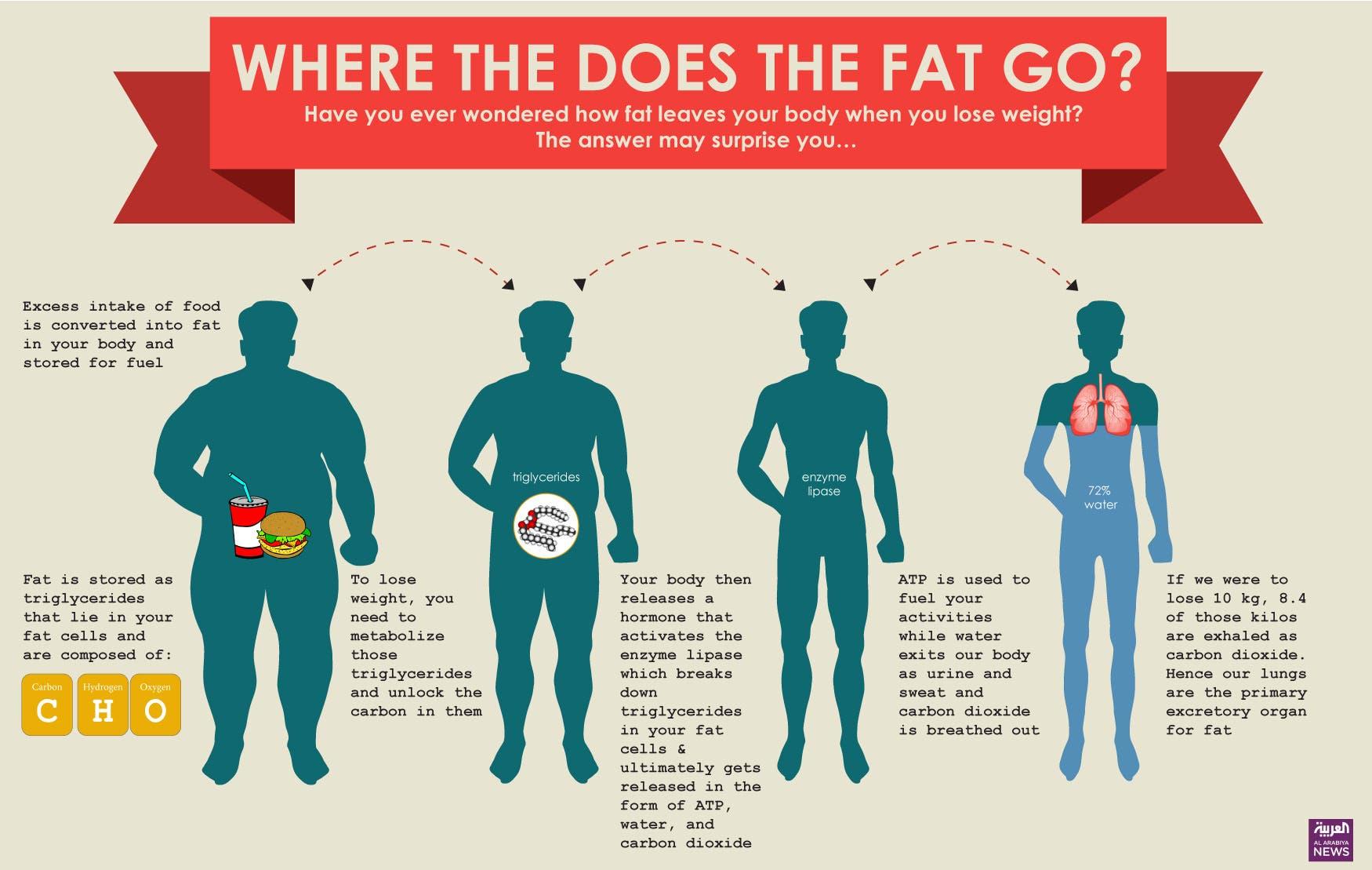 Fat Go 2