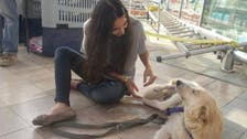 Egyptian dog finds refuge in U.S. after her puppies were murdered