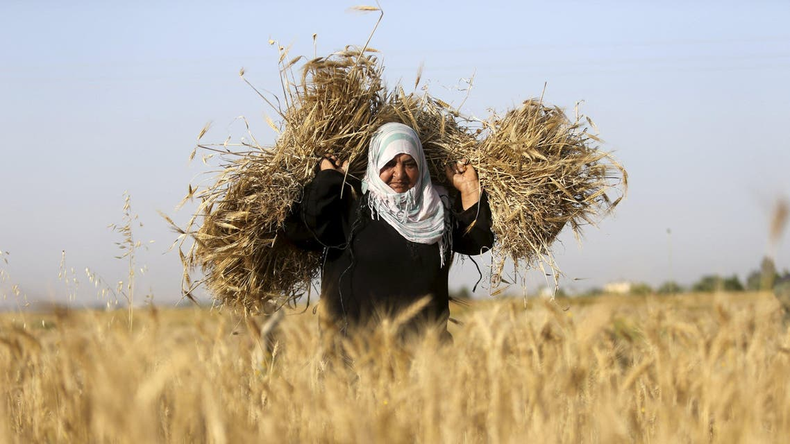 A Palestinian woman collects barley during harvest on a farm in Khan Younis in the southern Gaza Strip April 28, 2015. (File: Reuters)