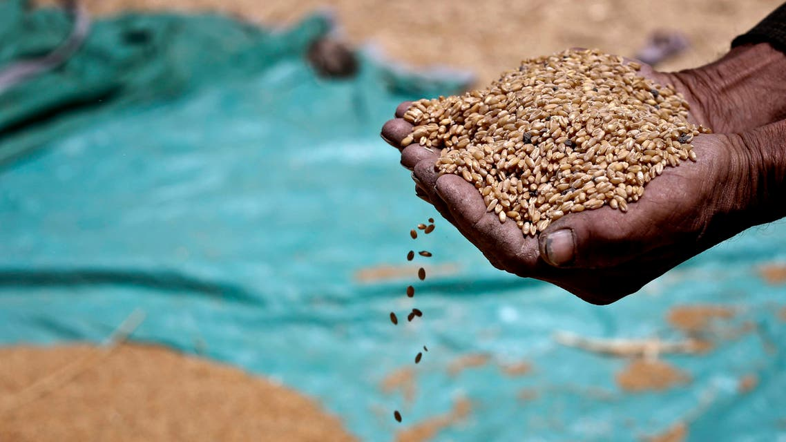 a farmer holds grains of wheat in his hands on a field in Fayoum, 60 miles, (100 kilometers), south of Cairo, Egypt. AP
