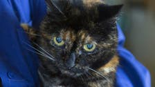 World's oldest cat dies after record-smashing life