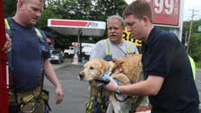Service dog throws self in bus' path to protect blind owner