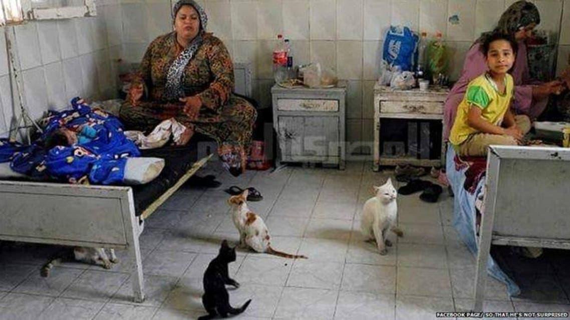 قطط في المستشفى