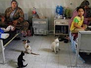 بالصور.. قطط وكلاب وماعز تتجول في #مستشفيات_مصر
