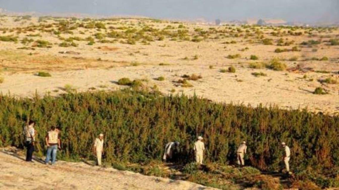 قوات مكافحة المخدرات في سيناء
