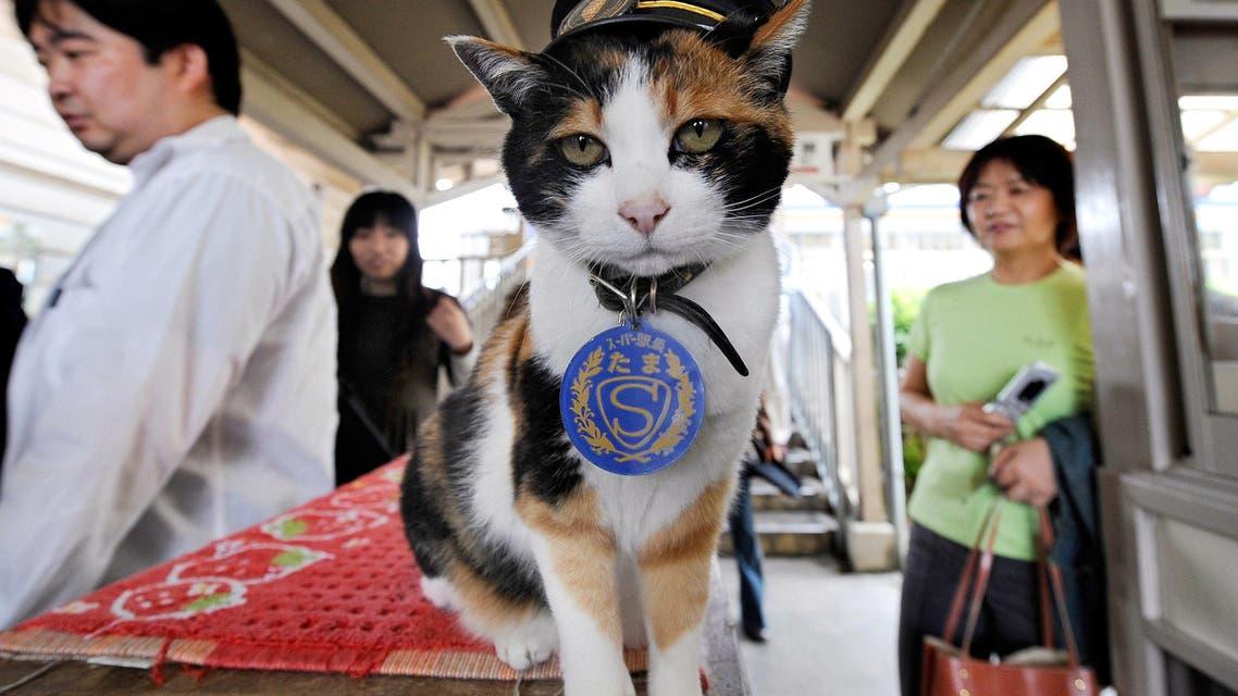 """Tama"", known as cat stationmaster of Wakayama Electric Railway, at Kishi station on the Kishigawa line in the city of Kinokawa, in Wakayama prefecture, western Japan. (File Photo: AFP)"