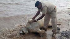 Dead lions in India floods spark catfight