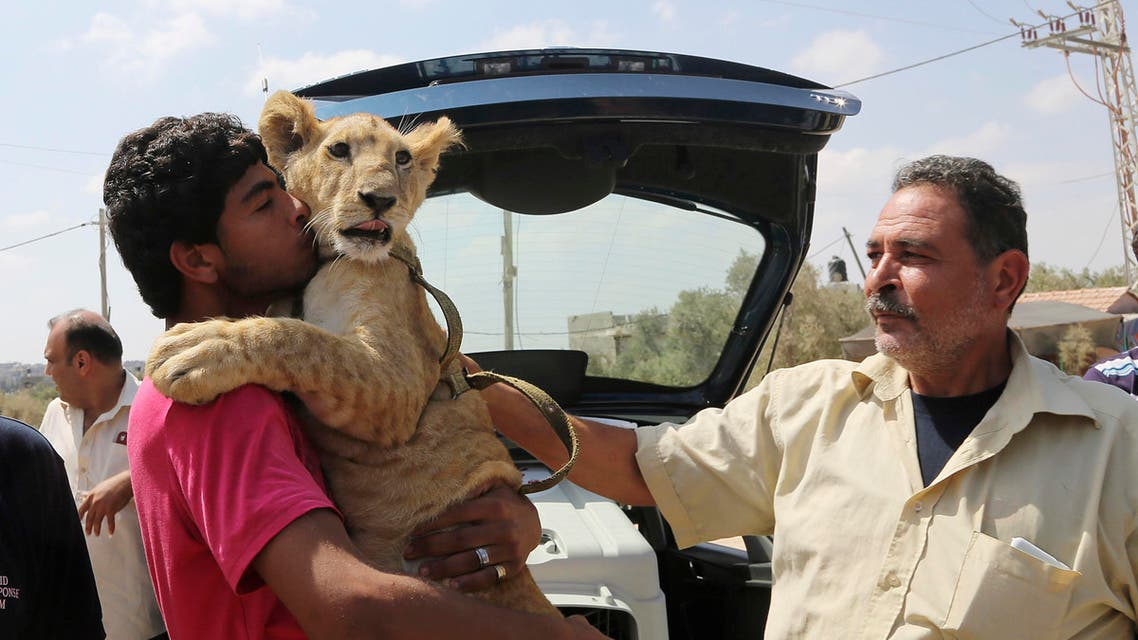 Ibrahim Al-Jamal, 17, hugs Mona, the female lion cub, as his father Saduldin, 54, strokes her as they wait to evacuate from Gaza to the Erez border crossing between Israel and the Gaza Strip, in Beit Hanoun, in the northern Gaza Strip, Friday, July 3, 2015. AP