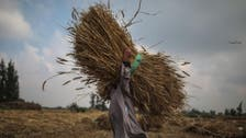 Egypt's strategic wheat reserves to last until end January