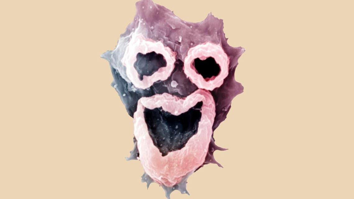 Naegleria fowleri amoebae  (Photo courtesy: Vocativ/Drs. D.T. John & T.B.)