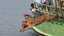 Only 100 tigers left in Bangladeshi forests