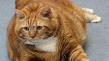 Fat cat gets fit! Former 41-pound feline in Texas slims down