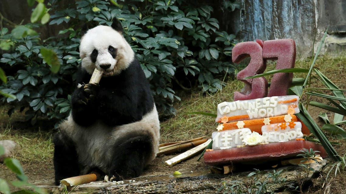 Giant panda Jia Jia eats beside a birthday cake made from ice and vegetables as she celebrates her 37-year-old birthday at the Hong Kong Ocean Park. Reuters