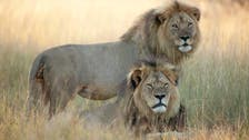 Despite rumors, Cecil the lion's brother Jericho 'is not dead'