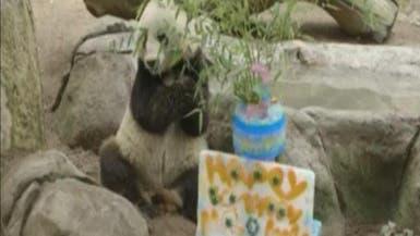 """حديقة حيوانات تحتفل بعيد ميلاد """"باندا"""""""