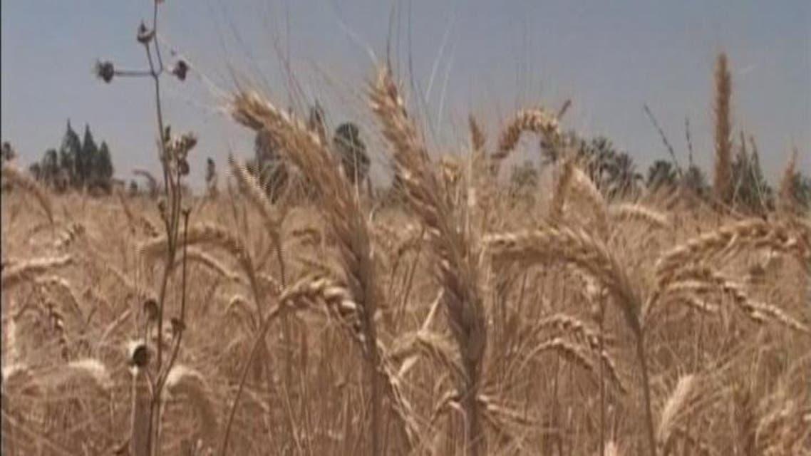THUMBNAIL_ داعش يسعى للسيطرة على مخزون القمح في سوريا والعراق