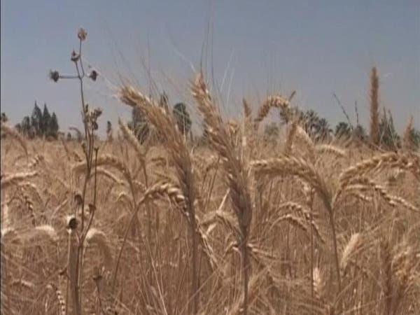 مصر: احتياطيات القمح تكفي 5 أشهر
