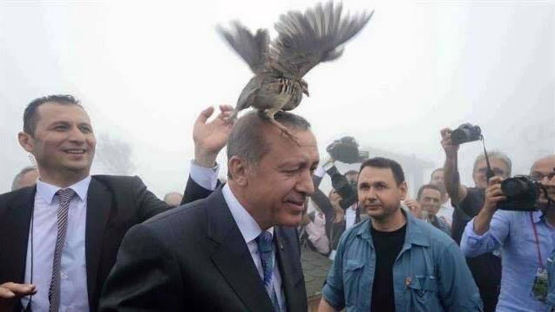 طائر أردوغان
