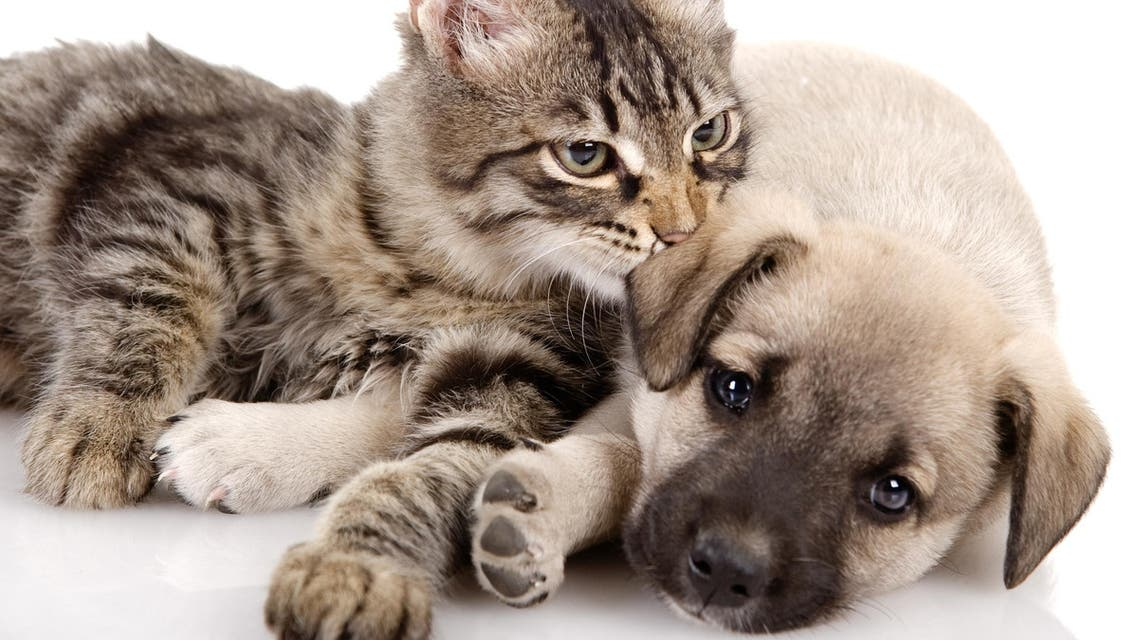 cats and dogs shutterstock