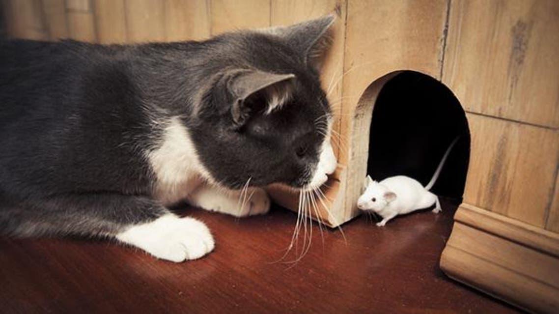 فأر و قطة