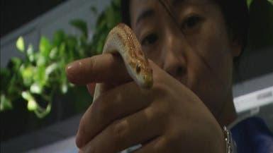 """مقهى """"ممنوع على ضعاف القلوب"""" في طوكيو"""