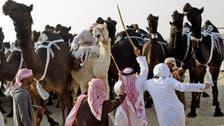 Saudi Arabia bans hajj camel slaughter