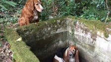 Dog's best friend: canine consoles, seeks help for trapped U.S. hound
