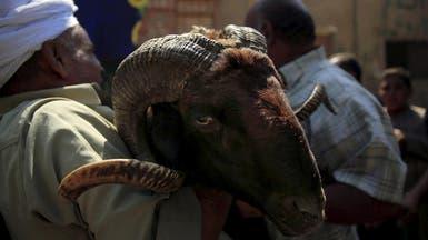 مصر.. حملات المقاطعة تؤثر على أسواق اللحوم