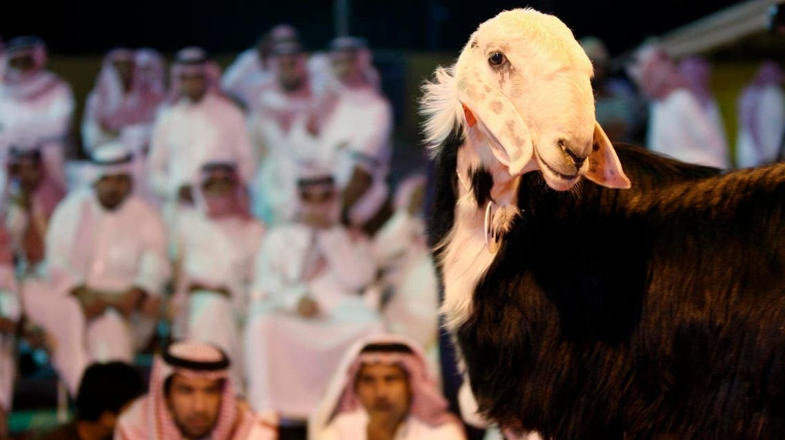 People look at a sheep during the sheep beauty pageant in Banban, north of the Saudi capital Riyadh, Saudi Arabia, on Oct. 30, 2008. (AP)