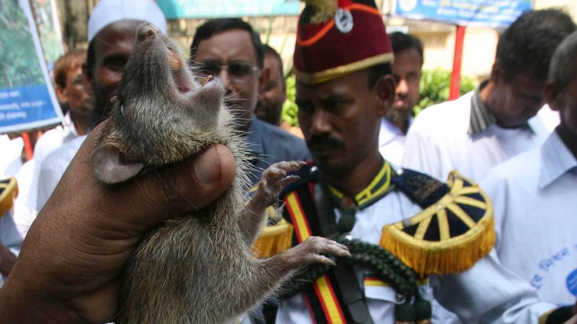 A farmer holds a rat he caught as others march the streets on the first day of a month long rat killing campaign in Dhaka, Bangladesh, Wednesday, Sept. 30, 2009. Bangladesh on Wednesday awarded a farmer who killed more than 83,000 rats and launched a month long campaign nationwide to kill millions more, to protect crops and reduce the need for food imports.(AP Photo/ Pavel Rahman)