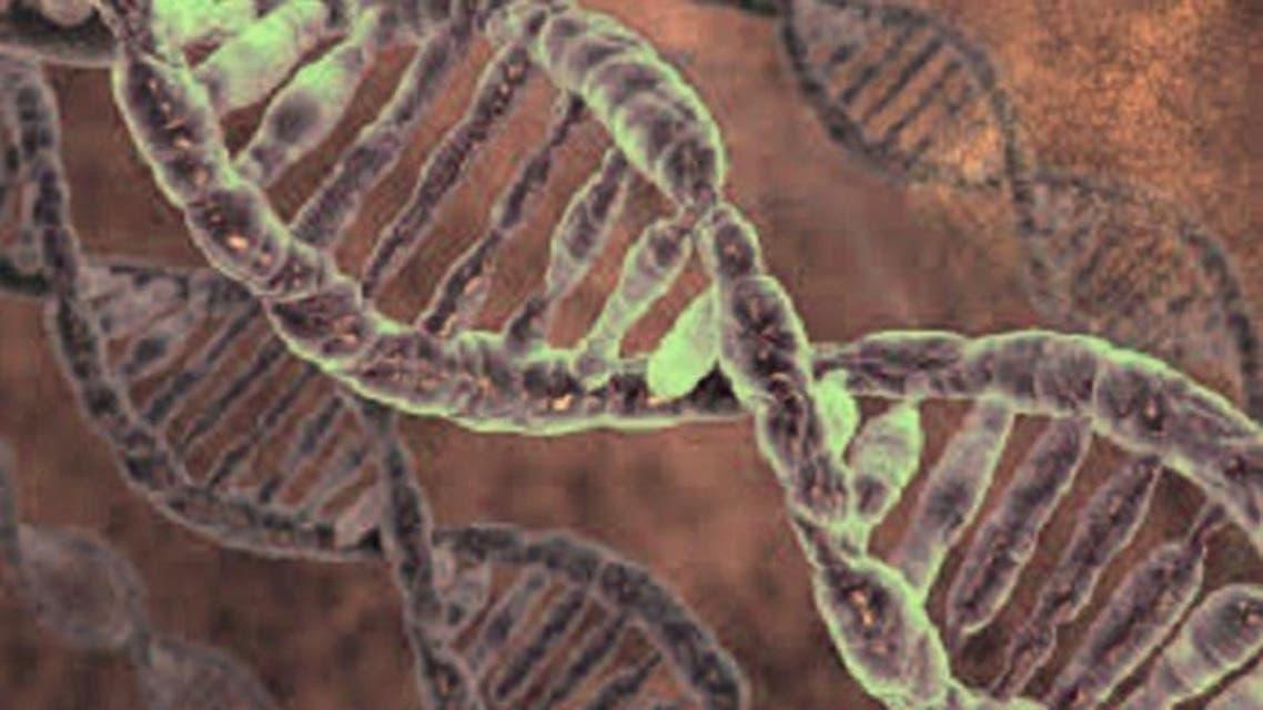 ايقاف نشاط الجينات المسؤولة عن الشيخوخة يطيل العمر بنسبة 60 % تقريبا