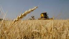 Jordan cancels tender for 100,000 tons barley