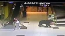 Wild bear shot after running through shopping mall in Russia