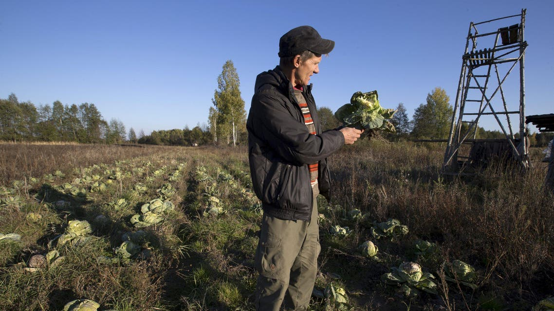 """Belarussian farmer Uladzimir Zhabyonak looks at cabbage eaten by elks, at his farm """"Siadziba Arataga"""" near the village of Apanasyonki, in a remote corner of Belarus, October 15, 2015. Zhabyonak grows vegetables and provides wildlife tours and tours of his farm for wildlife photographers and tourists. Picture taken October 15, 2015. REUTERS/Vasily Fedosenko"""