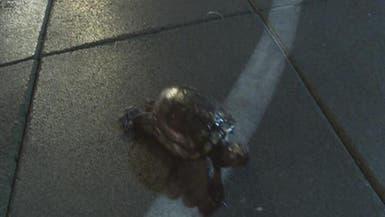 """السلاحف في لوس أنجلوس في """"سباق"""" هو الأغرب بالعالم"""