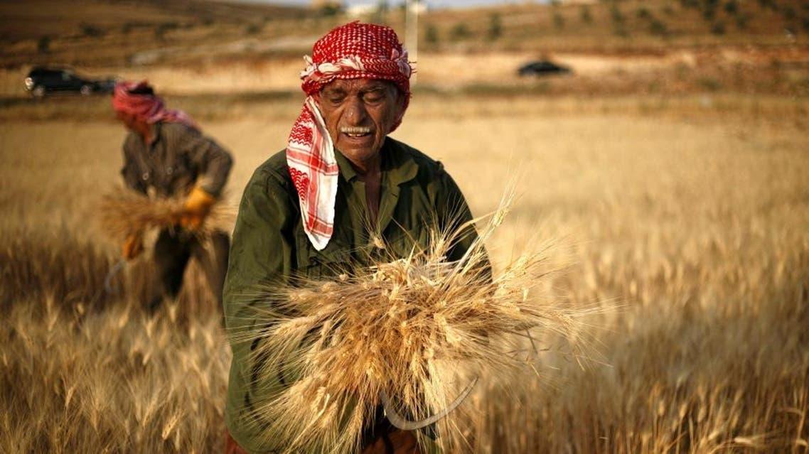 Jordanian farmers, Khalefa al-Abbadi, 69, foreground, and Falah al-Abbadi, 50, harvest wheat on the outskirts of Amman, Jordan, Saturday, June 16, 2012. (AP Photo/Mohammad Hannon)