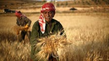 Egypt's agriculture minister reinstates zero ergot policy in wheat
