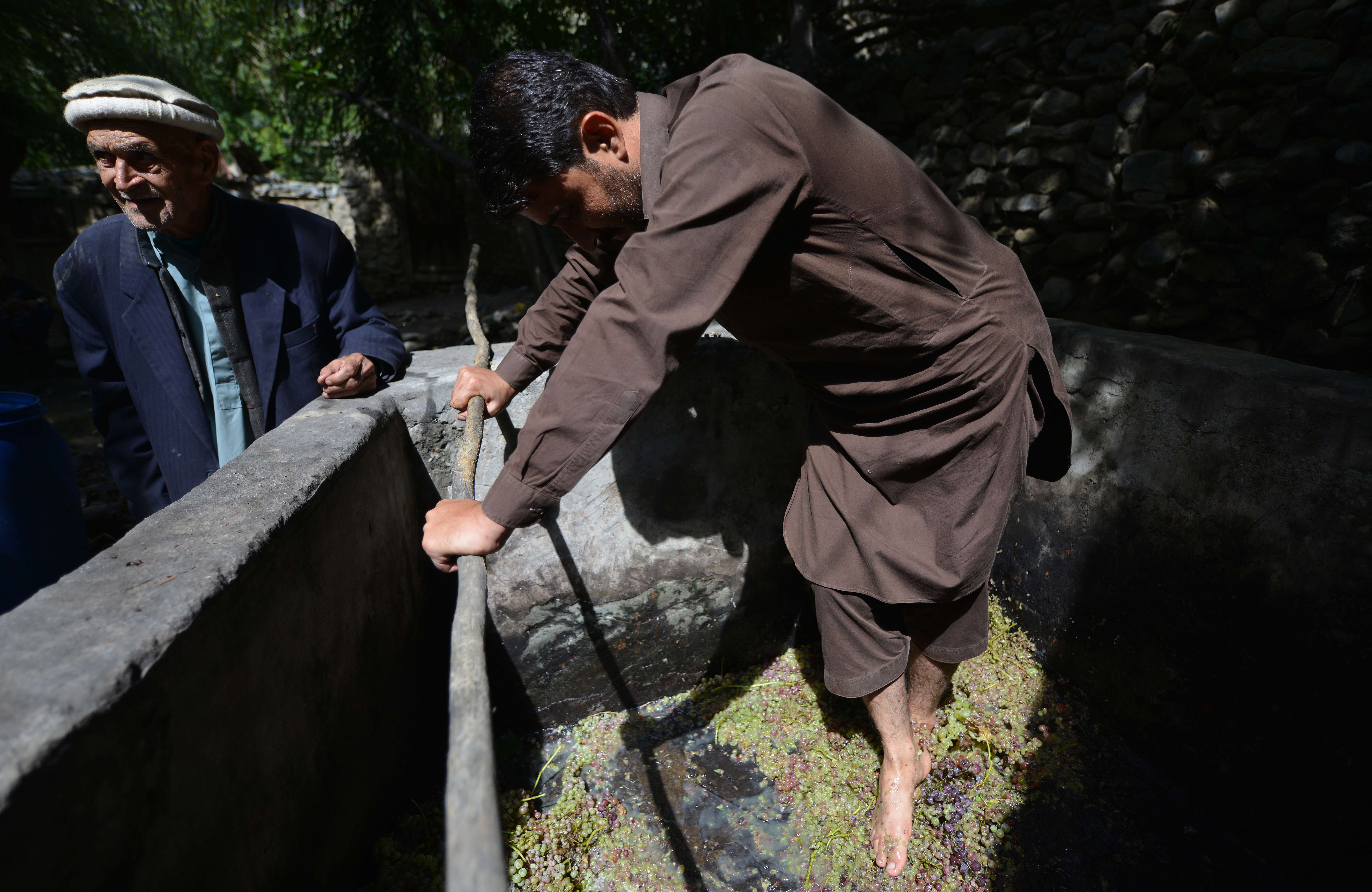 In this photograph taken on September 27, 2015, a local resident uses his feet to crush freshly picked grapes in a cement tank for brewing wine in a garden in the remote village of Sher Qilla in Punyal valley in northern Pakistan.