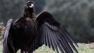 ثلث طيور أميركا الشمالية مهددة بالانقراض