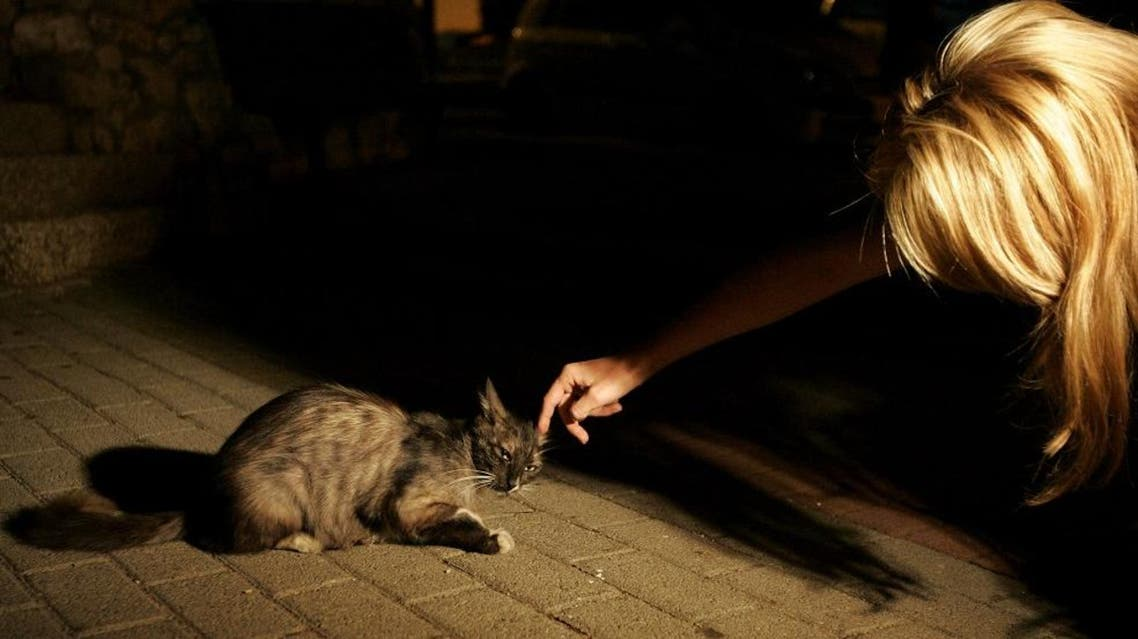 An Israeli woman pets a cat as volunteers, not seen, put water and food into small dishes for abandoned pets. (File: AP)