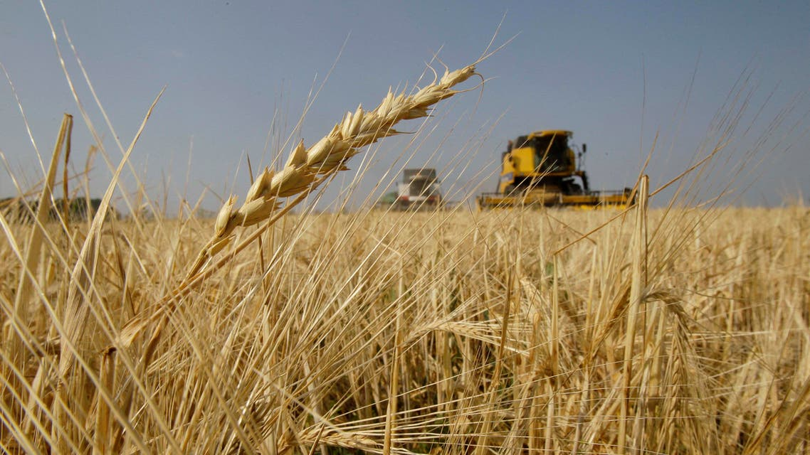 Farmers bring in the harvest with their combine harvesters, background, on a barley field near the village of Uzunovo in Moscow region, 170 km (105 miles) south of Moscow, Wednesday, Aug. 11, 2010. Last week, Moscow announced a ban on grain exports due to a severe drought that has reduced this year's estimated harvest by a third. (AP Photo/Ivan Sekretarev)