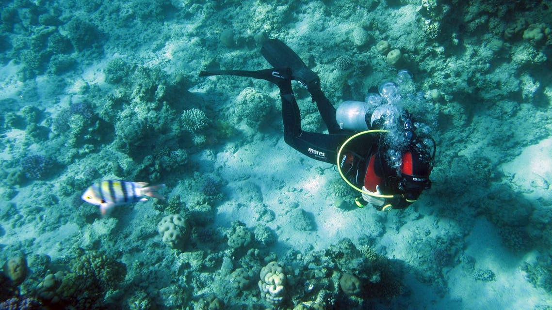 A diver navigates near coral reefs at the Red Sea resort of Sharm el-Sheikh, Egypt November 12, 2015. (Reuters)